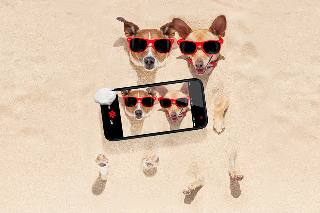 A Jack Russell Phone App?